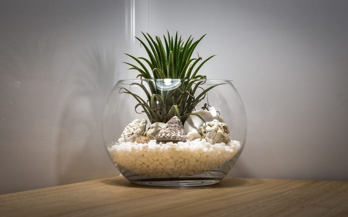 Terrarium Under 700 Pesos